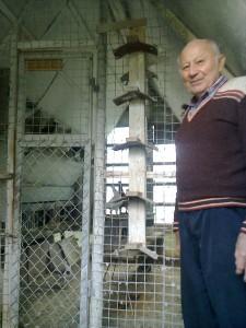 Kacetl, Německý výstavní holub
